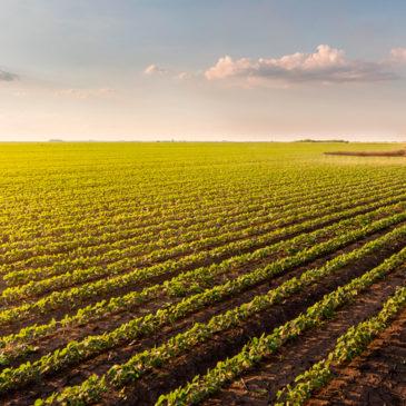 Як захистити посіви сої від бур'янів